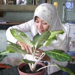 Andariani - Pemilik Florist & Stones Surabaya
